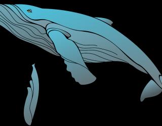 Blue Whale a Catania