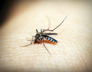 Donna punta da zanzara