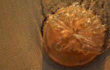 Contatto con una medusa: come comportarsi se si è allergici