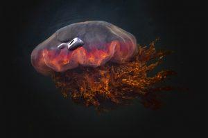 Irritazione da medusa: ecco come comportarsi in caso di allergie