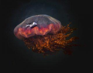 Irritazione da medusa