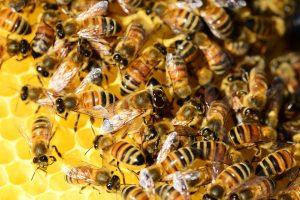 Punture api e vespe cosa fare: qual è il comportamento da seguire