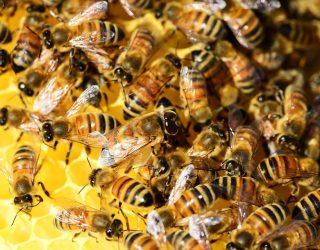 Punture api e vespe cosa fare