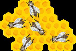 Punture di insetti: insidie che possono essere anche fatali