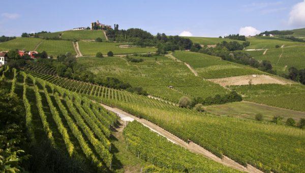 Consigli su come eliminare cimici: il volantino della Regione Piemonte