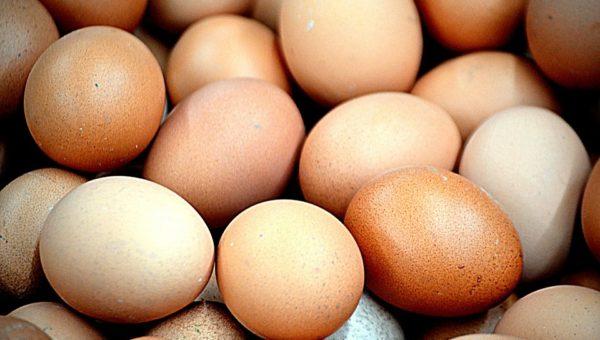 Aumento prezzi uova: la denuncia del Codacons e l'allarme Fipronil