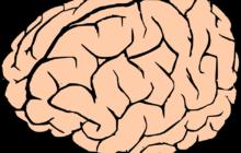 Sport da contatto dannoso: potrebbe comportare danni al cervello