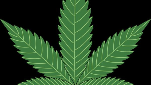 Francesco Monte su L'Isola: mai fumato marijuana