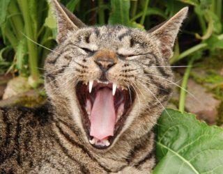Animali e mal di denti
