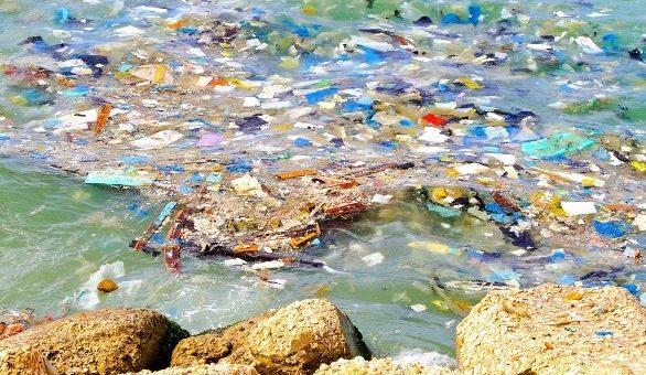 Lago d'Orta: pescato pesce con chele di granchio e plastica nello stomaco
