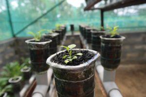 Coltivazione idroponica: piccola guida per effettuarla in casa